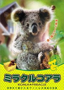 「こんな可愛らしいコアラを殺すとはケシカラン」そんな批判も聞こえるが(DVD「ミラクルコアラ」=ジェネオン・ユニバーサル・エンターテイメント)